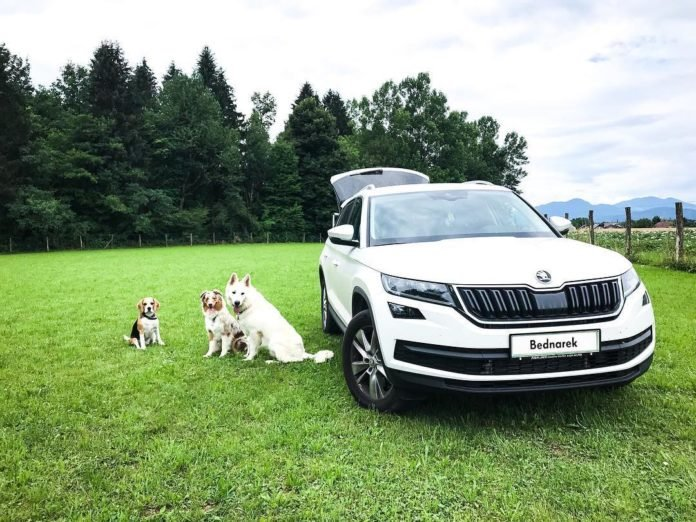 Собаки во время поездки
